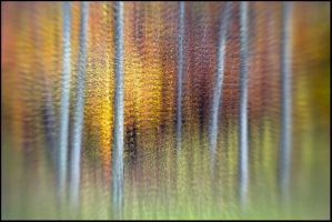 October Woods  Abstract by joerossbach