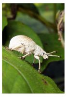 Friendly weevil by kiew1