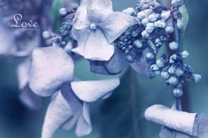 Blue Baby Hydrangea Close-Up by fear-inmotion