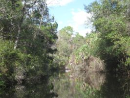 385 Homosassa State Park by crazygardener