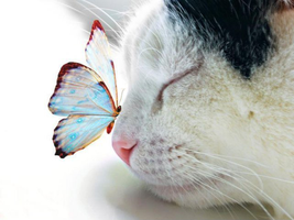 Lovely Cat and sweet butterfly by Daisydiy