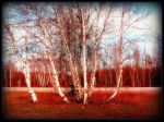 Bouquet Of Birch Trees In Spring by surrealistic-gloom