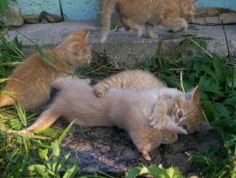 Kittenses 01 by Empy-Stock
