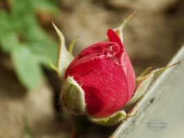 A lonely heart by SuperGirlSwag