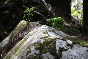 Mossy rock stock 4 by xxMysteryStockxx