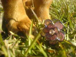 daisy found a flower by Tater-Munch