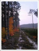 Deforesting and... by nosugar666