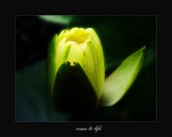 come to life by werol