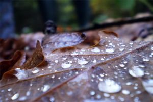 Leaf Droplets by CaCtiSaNdwich