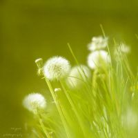 delicate by Megson