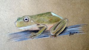 frog. by Hedwigs-art