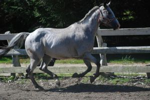 Appaloosa 69 by Spotstock