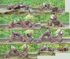 Otters PlayFighting by Tasastock