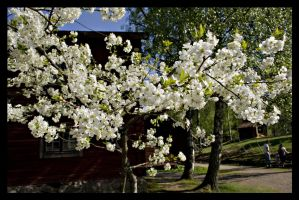 The look of spring by BimaFatima