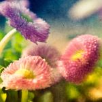 spring flowers by art-photo-kunst