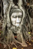 Buda and the Tree by rucorock