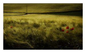 Junction with Pole and Poppies by HorstSchmier