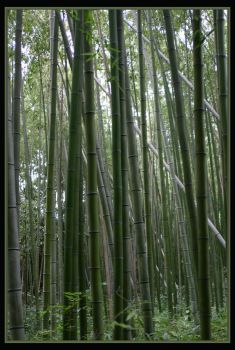 Bamboo Forest by cwfineart