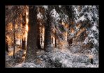 Light in the Forest by FatalBite