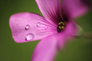 raindrops by denehy
