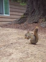 Gone Squirrely by wantingtobreakfree