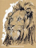 Lion by Quidfish
