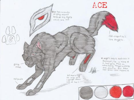Ace Character ref by wolfgurl325