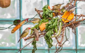 Feeding Finches by SkyRats