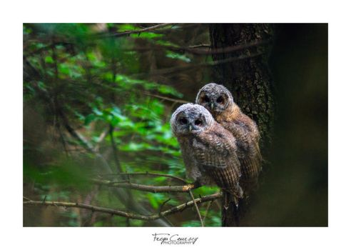 Whoooo's there? by FreyaPhotos