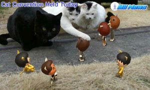 Cat Convention 2015 by GWizard777