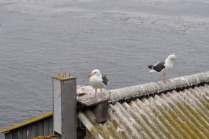 Seagulls on Building Overlooking Sea by Firepoppy