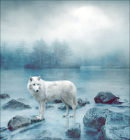 WolfManipulation White Wolf by Unknown-Diva