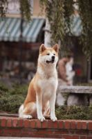 Hachiko by welovebigbang