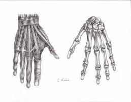 Skeletal Hands by Carminasimdesigner