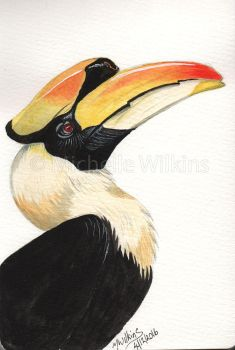 Double Hornbill Watercolour by DragonsDust