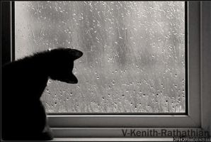 -Kitten Looking At The Rain- by V-Kenith-Rathathian