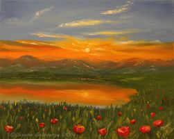 Mountain poppies at sunrise by Oksana007
