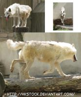 Three Wolves Pack by HKstock