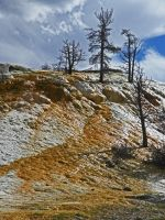 Mammoth Hot Springs II by Synaptica