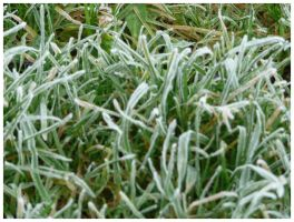 Frosted Grass by AranwA-Tari