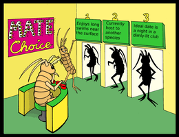 Amphipod Mate Choice Cartoon by crawdadEmily