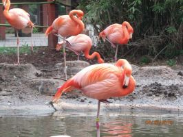 Flamingo Photo 2 by lovefistfury