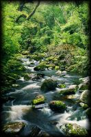 Forest Stream by Sir-Didymus