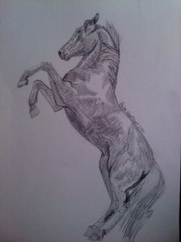 Shaded Hackney horse by DCSandface