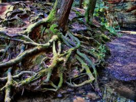 Must FULL VIEW Roots 03 by sixwings