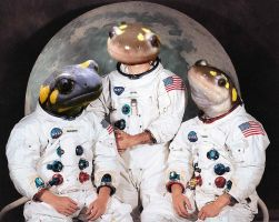 Request: What if Apollo 11 were Salamanders? by Nintendowaffle10