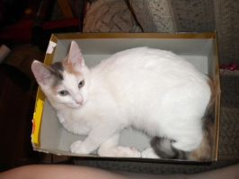 I has an box by Stock-By-Crystal