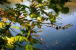 Small|Heaven|Of|Leaves|2 by Dc-Creative