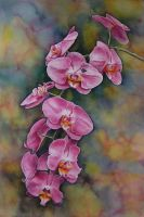 Pink Orchids by k8lag