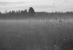 Foggy evening II by Tapire